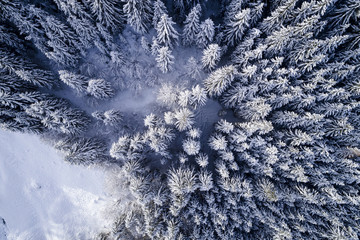 aerial flight with drone over coniferous forest in winter in austria in salzburg