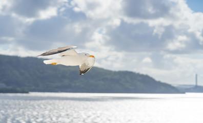 Flug einer Möwe im Gegenlicht