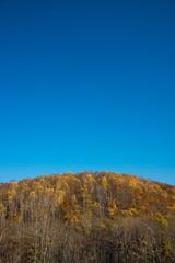 紅葉 国設滝野スズラン丘陵公園