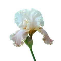 Fond de hotte en verre imprimé Iris iris flower
