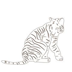 sketch of tiger, predator