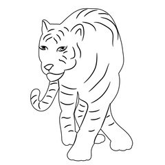 vector isolated sketch of a tiger