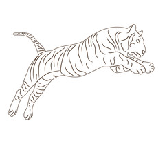 vector isolated sketch of a tiger leaping