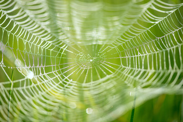 Abstract blur of a spider net over green background