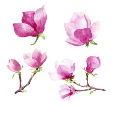 Magnolia flowers watercolor hand painted clip art floral illustration wedding invitations thank you cards calendars
