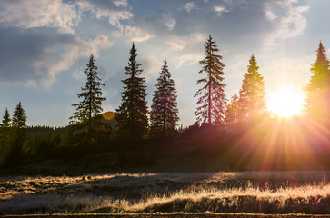 sunburst through spruce forest. beautiful nature scenery of mountainous area in Apuseni natural park at sunrise