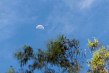 Waning moon seen from Guatemala City with branches of trees.