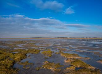 Salzwiese an der Nordsee