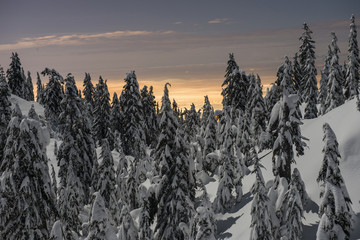 Scenic view of snow covered trees during sunset