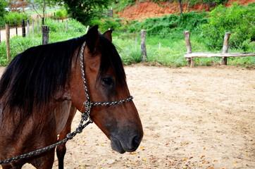Cavalo amarrado em sombra