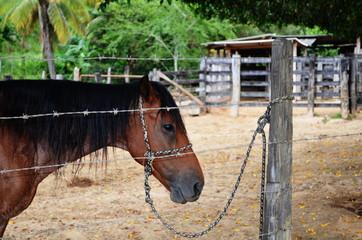 Cavalo em sonolência
