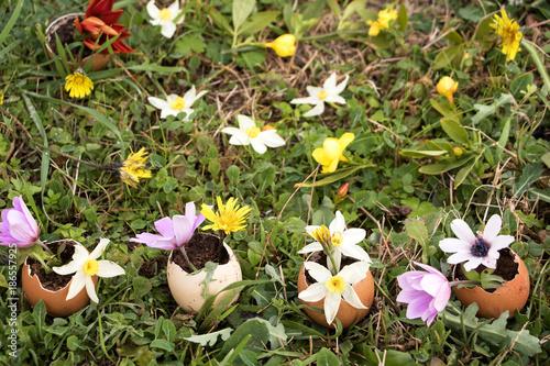 Erste Fruhlingsblumen In Eierschalen Gepflanzt Stock Photo And