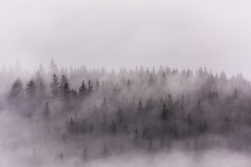 Foggy Landscape. Misty morning view in wet mountain area.