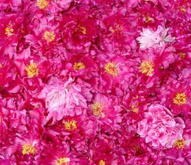 Photo sur Aluminium Fleurs Vintage carpet peonies square image