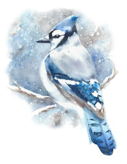 Blue jay bird winter blue color bird in snow watercolor painting illustration isolated on white background