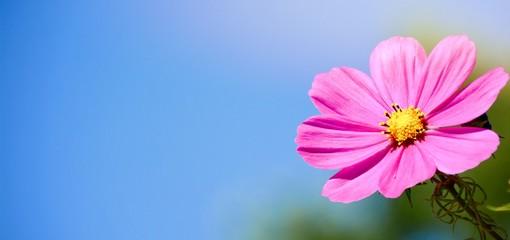 Fototapete - Blumenwiese