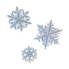 Three snowflakes isolated on white background. Macro photo of real snow crystals: stellar dendrites with complex ornate shapes, perfect hexagonal symmetry, long elegant arms and glossy relief surface.