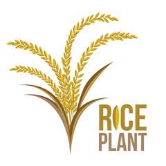 Rice Plant on white background ,Vector, illustration.