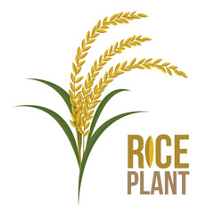 Rice Plant on white background ,Vector, illustration.