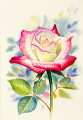 Watercolor painting original realistic happy postcard  colorful flower of rose