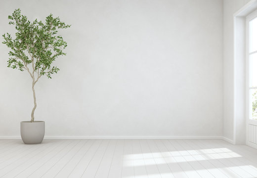 Indoor plant on wooden floor with empty white concrete wall background, Tree near door in bright living room of modern scandinavian house - Home interior 3d illustration