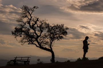 silhouette man standing  under the tree in sunset time.