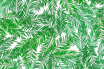 Seamless pattern with palm tree green leaves on white background.