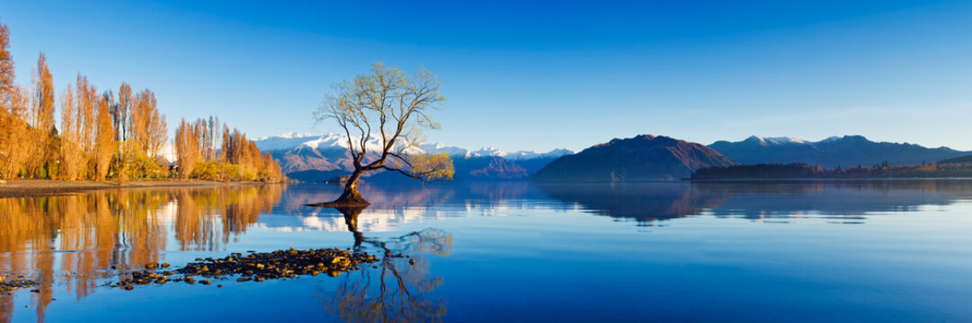 Panoramic landscape photograph of the lone tree at Lake Wanaka in the South Island of New Zealand. Blue sky and water reflection.