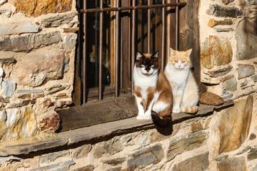 Gatos comunes tomando el sol en la ventana de una casa.