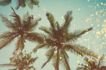 Palm trees retro color toned with shiny party bokeh glitter golden lights effect