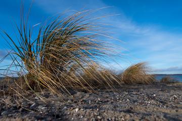 Gras am Strand - Norddeutschland