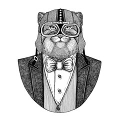 Wild cat Manul Animal wearing jacket with bow-tie and biker helmet or aviatior helmet. Elegant biker, motorcycle rider, aviator. Image for tattoo, t-shirt, emblem, badge, logo, patch