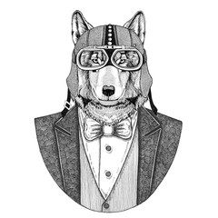 Wolf, wild dog Animal wearing jacket with bow-tie and biker helmet or aviatior helmet. Elegant biker, motorcycle rider, aviator. Image for tattoo, t-shirt, emblem, badge, logo, patch