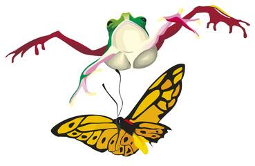 Grenouille sautant sur un papillon