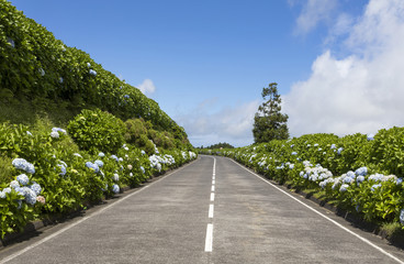 Beautiful Coastline road in Sao Miguel Island - Azores