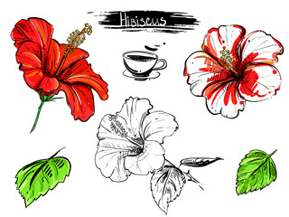 Hand drawn illustration set of color hibiscus flowers, branch, leaf. sketch. Vector eps 8