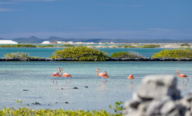 Garden Poster Flamingo Heart formed by two flamingos in the salt flats in Bonaire (netherlands antilles)
