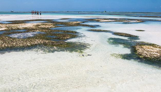 White Sand beach in Diani, Kenya