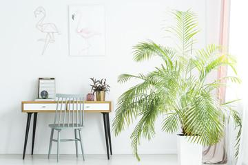 Big palm next to desk