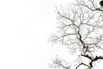 Tree branches isolated on the white background.