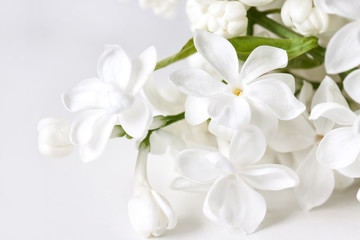 White lilac flowers blossom, floral wallpaper
