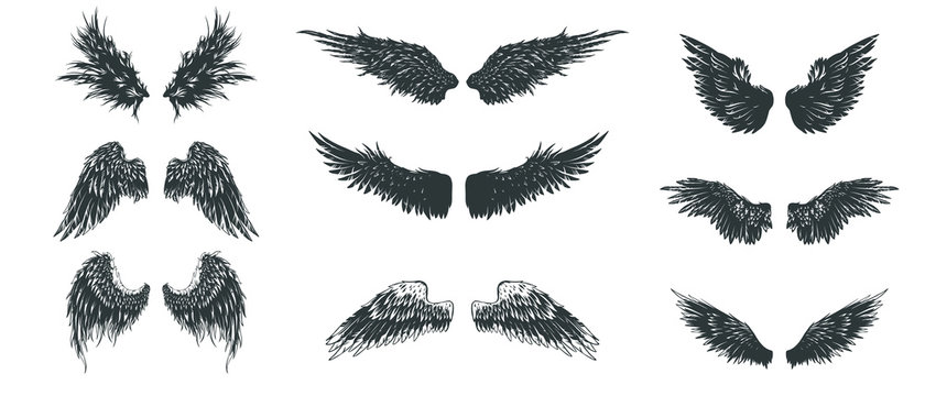 Wings set. Hand drawn detailed wings collection.