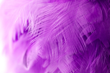 Bird,chickens feather texture for background,Abstract,postcard,blur style,soft color of art design.fashion 2018 trend.