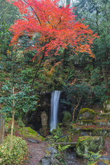small water fall in forest autumn season with red maple in japan