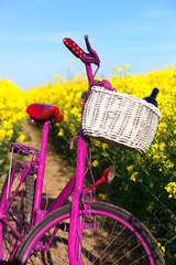 pink bike in the field of rape