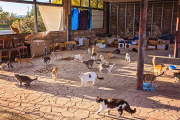 Many stray. Cats are dirty, they get sick, cats need a vet and a new home