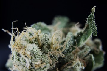 Macro detail view of medical marijuana bud
