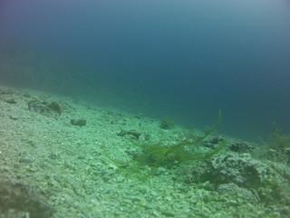 Schonwieder Algen-Seestern und Taucher