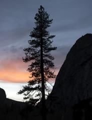Single Pine Tree in Silhouette against Sunset in Sierras