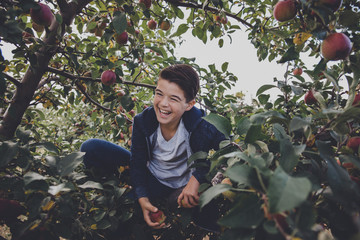 Cheerful boy sitting on apple tree in orchard